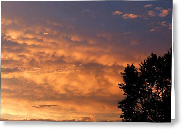 Silhouette Of Tree Greeting Cards - End Of Day Drama Greeting Card by Will Borden