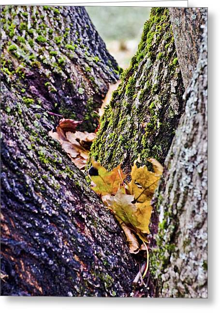 Roger Lewis Greeting Cards - End of Fall Greeting Card by Roger Lewis
