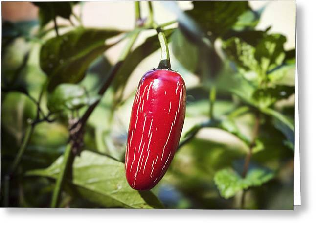 Jalapeno Greeting Cards - End of Garden Season Greeting Card by Patrick M Lynch