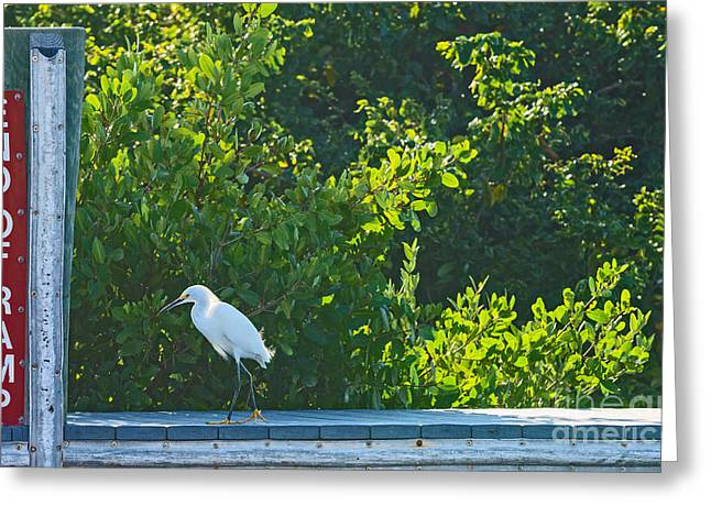 End of Ramp Greeting Card by Anne Kitzman
