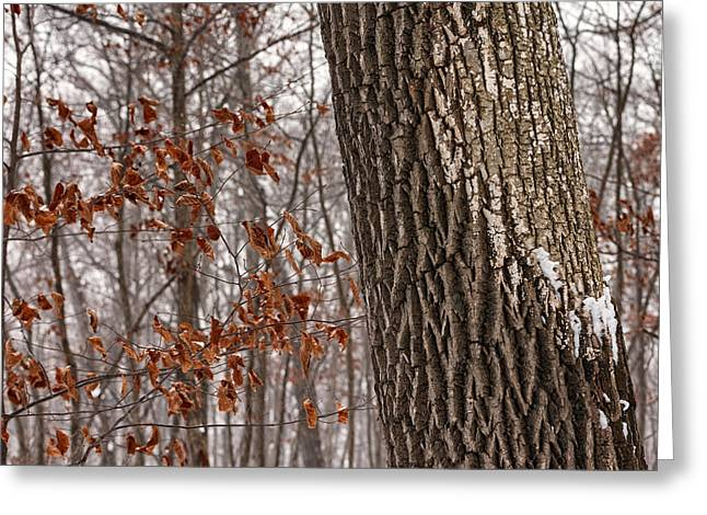 Petrifying Springs Greeting Cards - End to Autumn Beginning of Winter Greeting Card by Chris Tobias