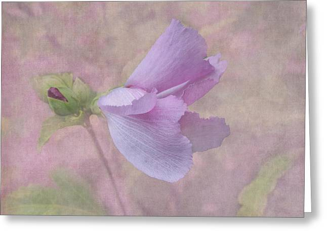 Rose Of Sharon Greeting Cards - Ending Gracefully Greeting Card by Angie Vogel