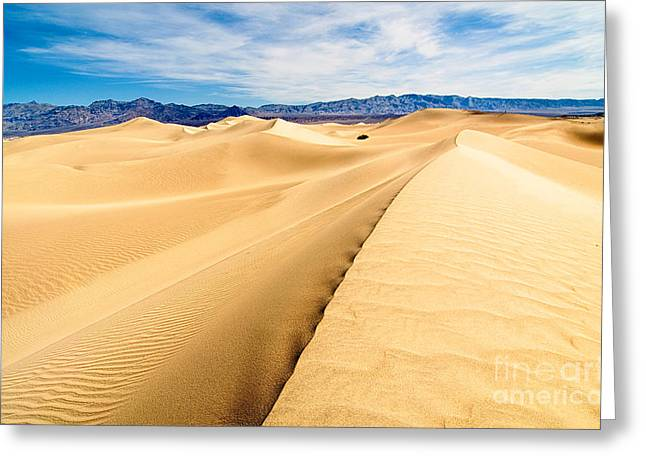 Golden Sand Greeting Cards - Endless Dunes - Panoramic view of sand dunes in Death Valley National Park Greeting Card by Jamie Pham