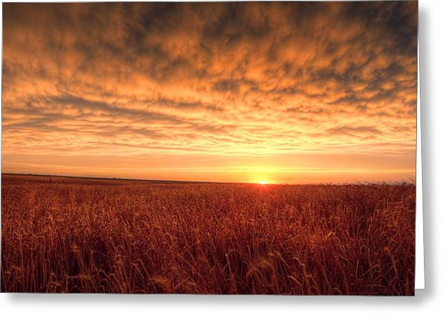 Farmers Field Greeting Cards - Endless Oz Greeting Card by Thomas Zimmerman