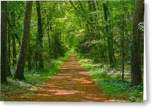 Endless Trail into the Forest Greeting Card by Nila Newsom