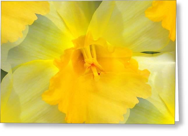 Floral Digital Art Digital Art Greeting Cards - Endless Yellow Daffodil Greeting Card by Judy Palkimas