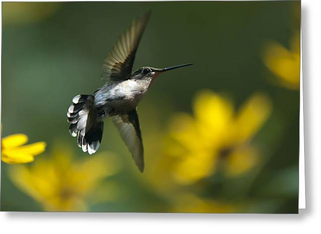Hovering Greeting Cards - Energy In Motion Greeting Card by Christina Rollo