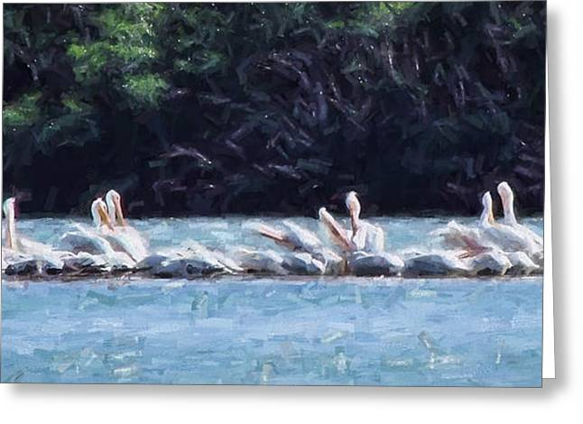 Englewood Greeting Cards - Englewood White Pelicans  Greeting Card by David Francey