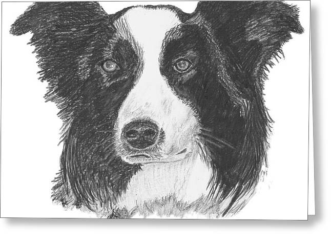 Dog Owner Drawings Greeting Cards - English Border Collie Greeting Card by Catherine Roberts