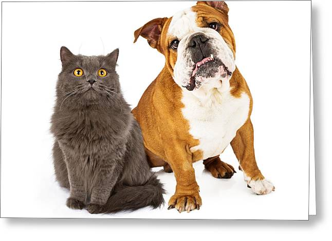 Obedient Greeting Cards - English Bulldog and Gray Cat Greeting Card by Susan  Schmitz