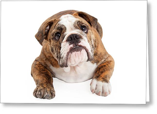 Full-length Portrait Greeting Cards - English Bulldog Laying Looking Up Greeting Card by Susan  Schmitz