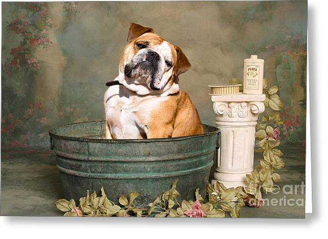 English Bulldog Portrait Greeting Cards - English Bulldog Portrait Greeting Card by James BO  Insogna