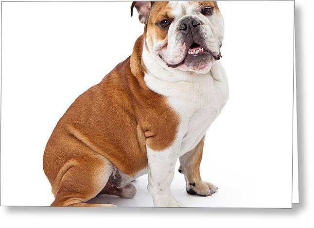 Guard Dog Greeting Cards - English Bulldog Sitting  Greeting Card by Susan  Schmitz