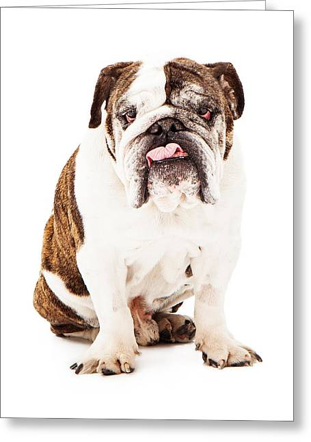 Dog Photographs Greeting Cards - English Bulldog Sticking Tongue Out Greeting Card by Susan  Schmitz