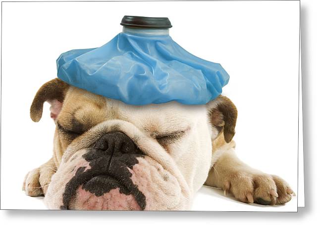Grumpy Face Greeting Cards - English Bulldog With Ice Pack Greeting Card by Jean-Michel Labat