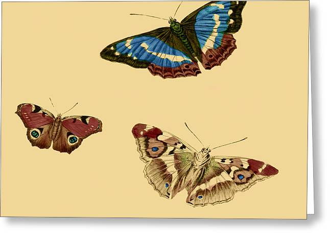 Office Plants Drawings Greeting Cards - English Butterflies Greeting Card by Philip Ralley