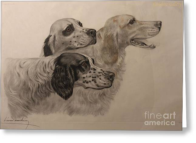 Full-length Portrait Greeting Cards - English Setters Greeting Card by Celestial Images