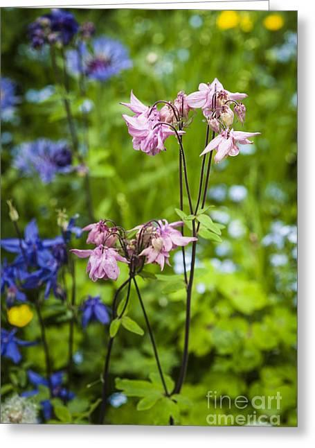 2013 Digital Art Greeting Cards - English Spring Garden Greeting Card by Donald Davis