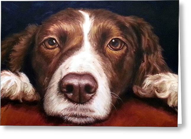 Spaniel Greeting Cards - English Springer Spaniel Resting on Dark Red Greeting Card by Dottie Dracos