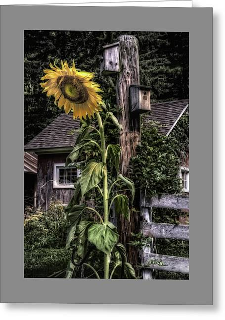 Sunflower Country Greeting Card by Thomas Schoeller