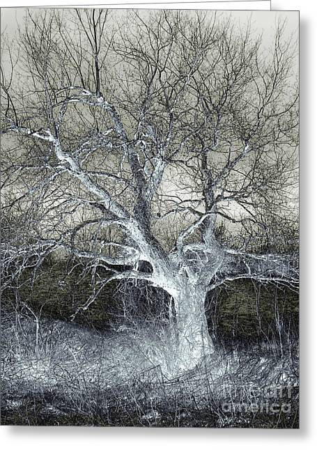 Surreal Landscape Greeting Cards - Enigmatic Tree Of Light Greeting Card by Miss Dawn