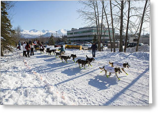 Dog Sled Racing Greeting Cards - Enjoying an Easy Day Greeting Card by Tim Grams