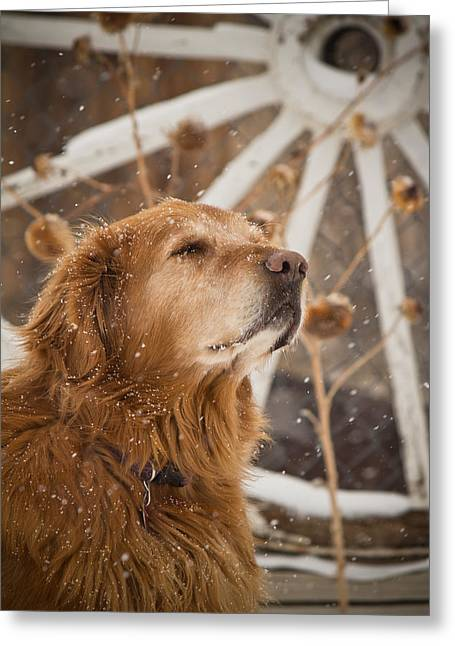 Recently Sold -  - Log Cabins Greeting Cards - Enjoying the Moment - Golden Retriever - Casper Wyoming Greeting Card by Diane Mintle