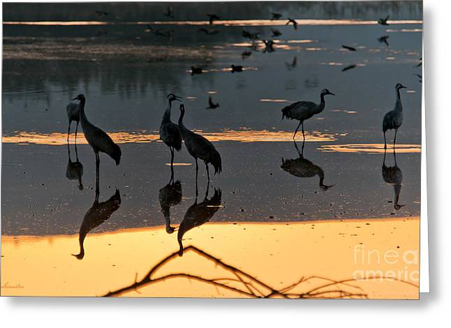Color Photography Greeting Cards - Enjoying the sunrise Greeting Card by Arik Baltinester