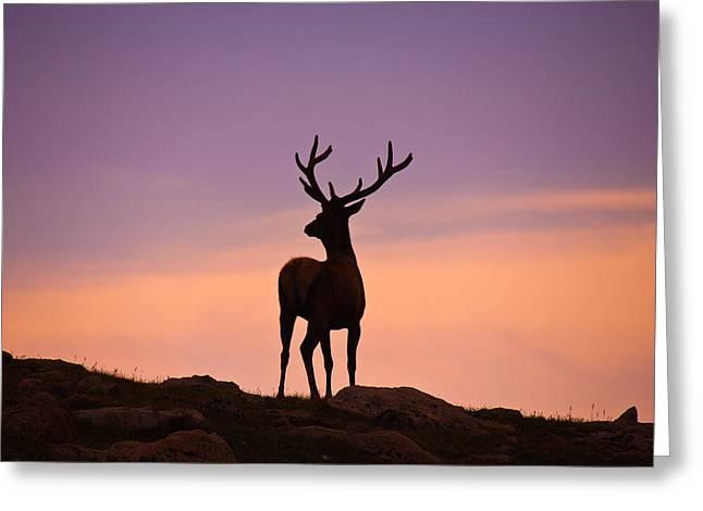 Enjoying the View Greeting Card by Darren  White