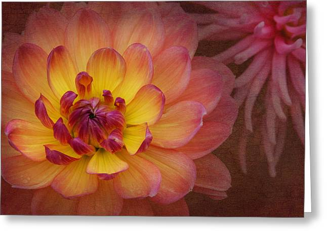 Color Enhanced Greeting Cards - Enlightened Dahlia Greeting Card by Angie Vogel