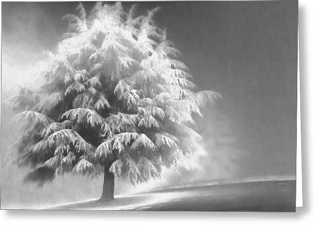 Enlightened Tree Greeting Card by Don Schwartz