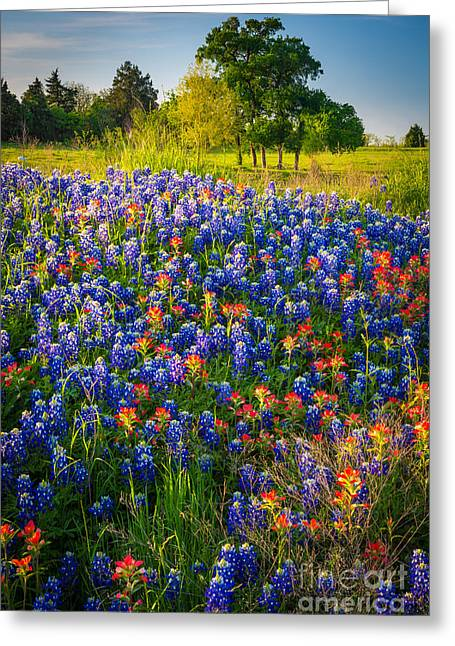 Grapevine Photographs Greeting Cards - Ennis Bluebonnets Greeting Card by Inge Johnsson