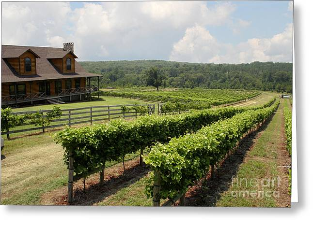 Grapevine Greeting Cards - Enochs Vineyard Greeting Card by Paul Anderson