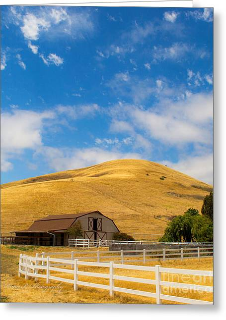 Napa Valley Canvases Greeting Cards - Entering Napa valley 2 Greeting Card by Rima Biswas