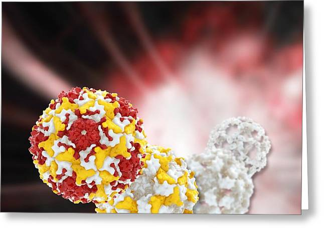 Enterovirus capsid proteins structure Greeting Card by Science Photo Library