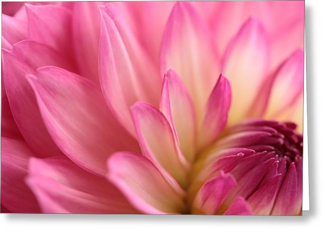 Up Close Flowers Greeting Cards - Enticement Greeting Card by Connie Handscomb
