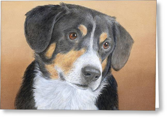Swiss Paintings Greeting Cards - Entlebucher Mountain Dog Greeting Card by Diane Cardaci