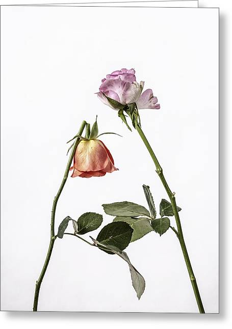 Roses Greeting Cards - Ephemeral Greeting Card by Joana Kruse