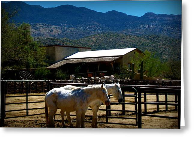 Rincon Greeting Cards - Equestrian Ranch Life Below the Rincons Greeting Card by Aaron Burrows