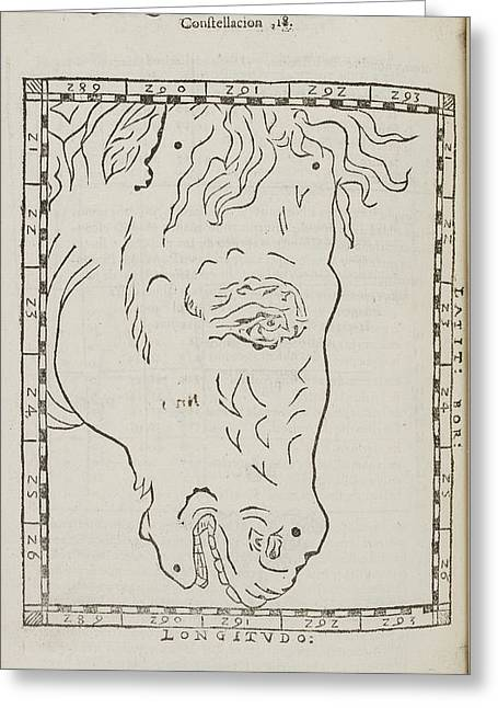 Equiculus Star Constellation Greeting Card by British Library