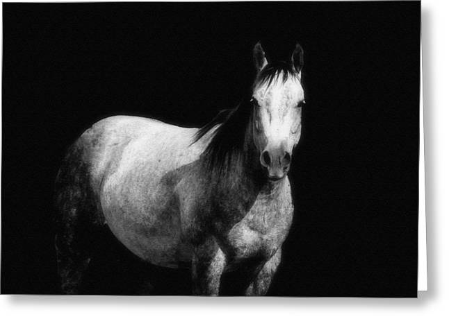 Desing Digital Art Greeting Cards - Equine Greeting Card by Barbara Chichester