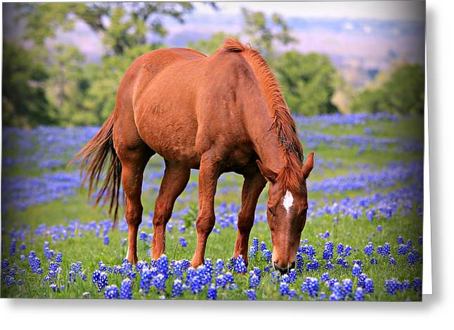 Star Greeting Cards - Equine Bluebonnets Greeting Card by Stephen Stookey