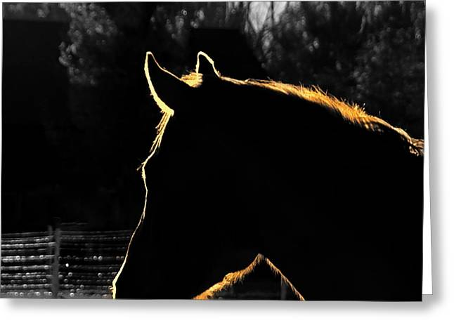Cowboy Art Collector Greeting Cards - Equine Glow Greeting Card by Steven Milner