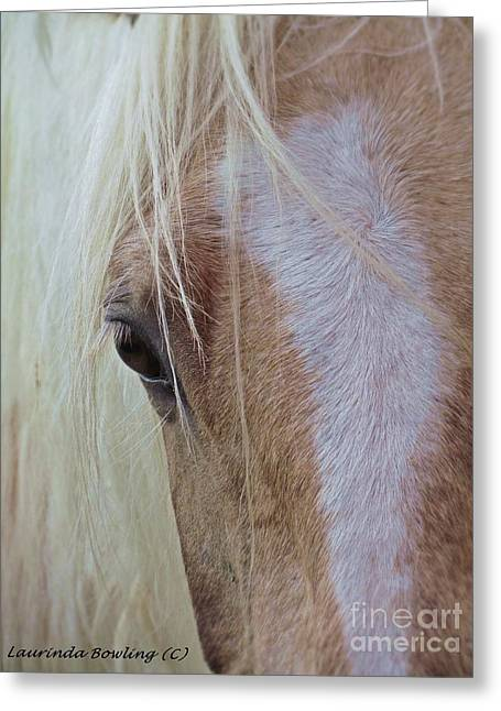 Paint Photograph Greeting Cards - Equine Head Study Greeting Card by Laurinda Bowling
