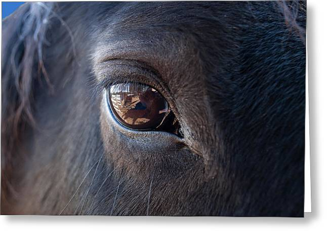 Horse Photographs Greeting Cards - Equine In Sight Greeting Card by Sheryl Cox