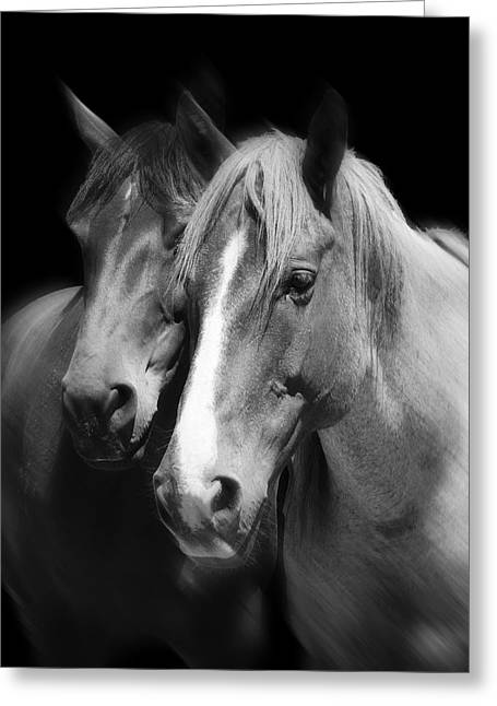 Quarter Horse Greeting Cards - Equine Peace Greeting Card by Daniel Hagerman