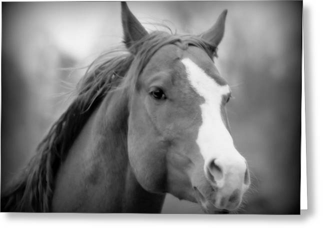 Gnarly Greeting Cards - Equine Reverie VIII - black and white Greeting Card by Aurelio Zucco
