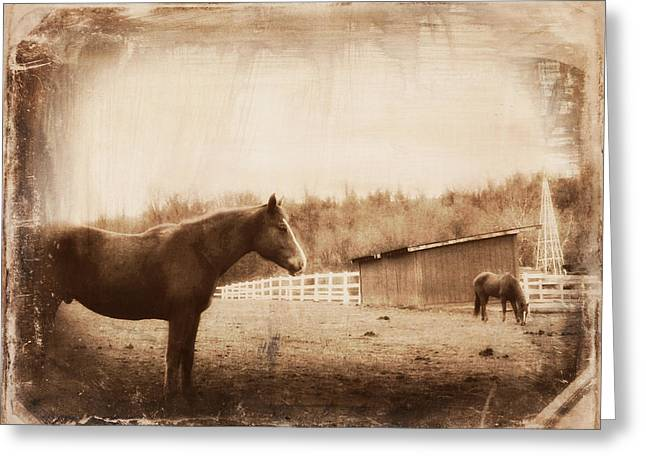 Gnarly Greeting Cards - Equine Reverie X Greeting Card by Aurelio Zucco
