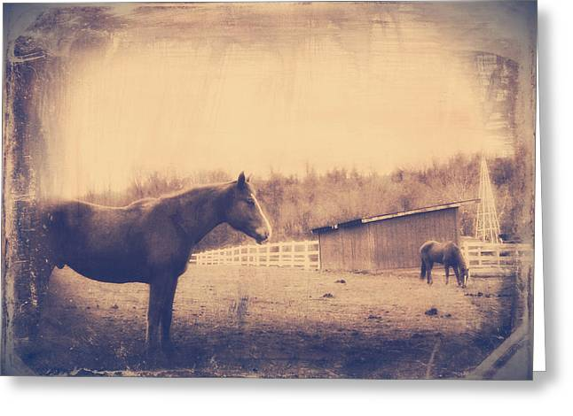 Gnarly Greeting Cards - Equine Reverie XI Greeting Card by Aurelio Zucco