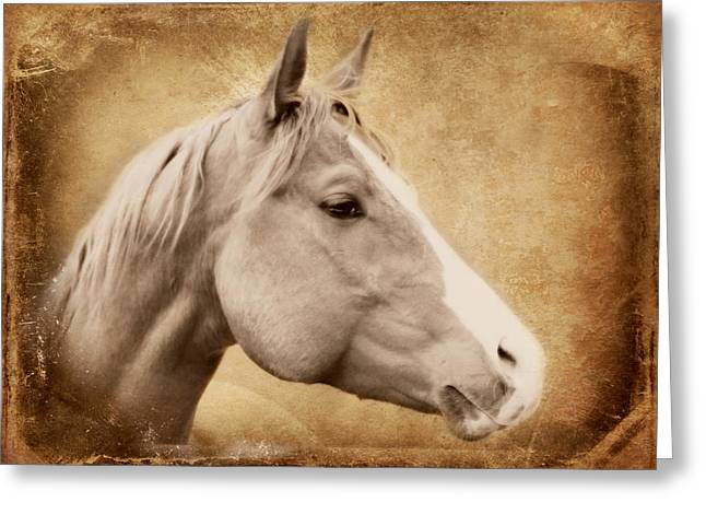 Gnarly Greeting Cards - Equine Reverie XII Greeting Card by Aurelio Zucco